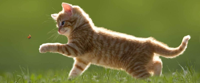 Sexy mannen opgelet! Kattenasiel zoekt mooie mannen voor op de kattenkalender.