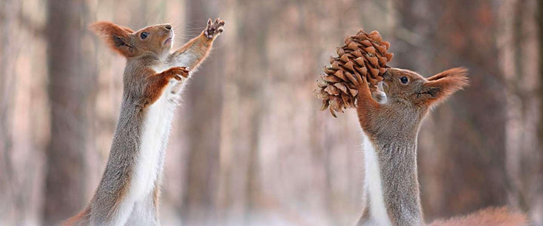 Dit zijn de liefste foto's de je ooit van een eekhoorntje hebt gezien!