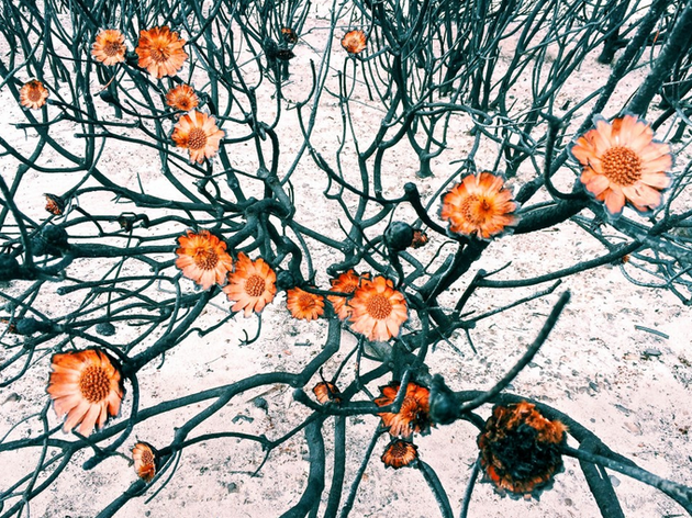 amy-peterson-flowers-ippawards
