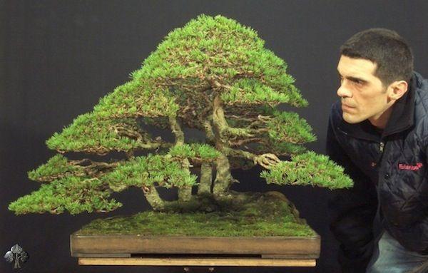 Duurste-bonsaibomen-ter-wereld-4
