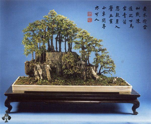 Duurste-bonsaibomen-ter-wereld-5