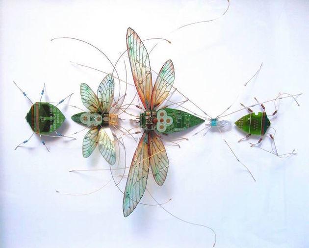 julie alice chappell insecten