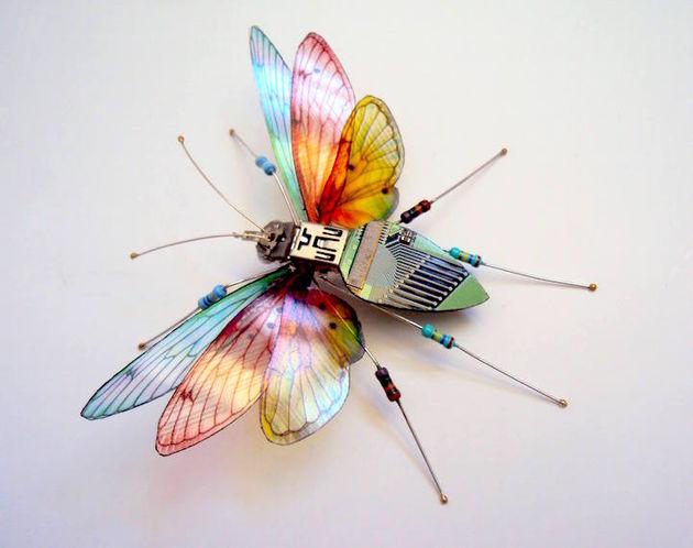 julie alice chappell vlinder