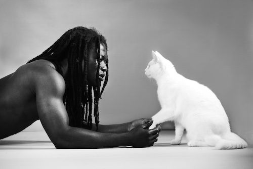 kattenkalender-3