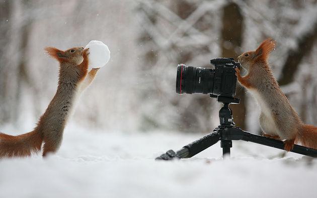 Liefste-foto's-eekhoorntjes-1