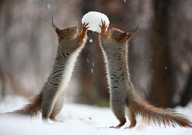 Liefste-foto's-eekhoorntjes-3