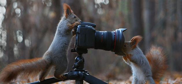 Liefste-foto's-eekhoorntjes-7