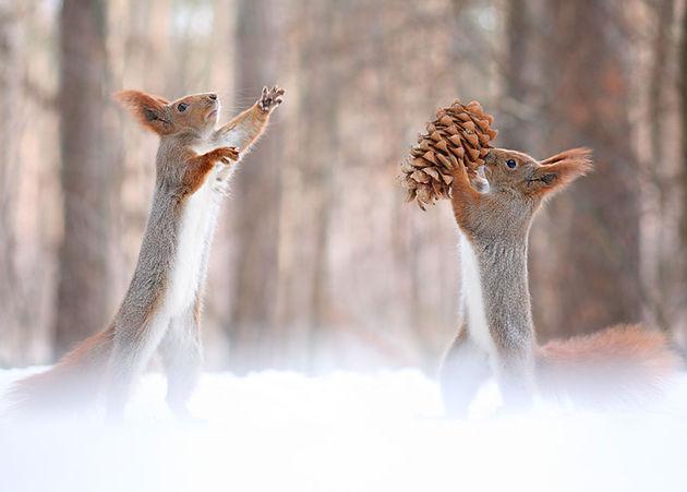 Liefste-foto's-eekhoorntjes-9