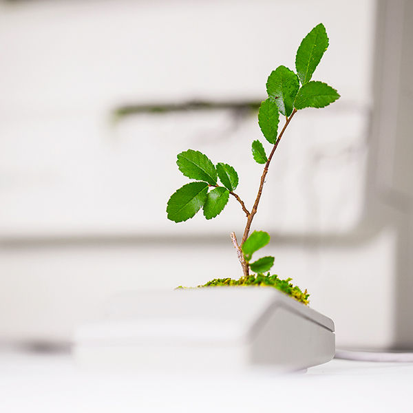 Plant_you_Mac_macbonzai_monsieur_plant_2016_2_instgram
