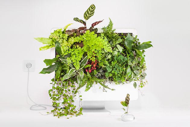 Plant_Your_Mac_imacwallplant_Monsieur_plant_2016_2