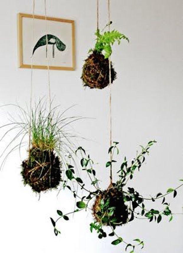 planten aan een touwtje