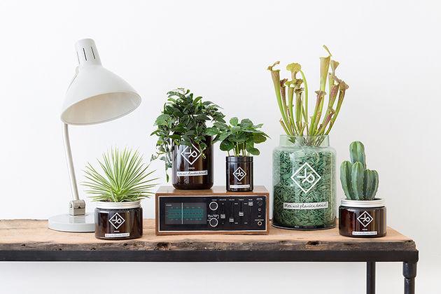 planten-voor-mannen