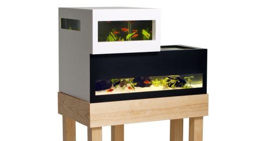 Voor Trendy Guppies en Glamour goudvissen