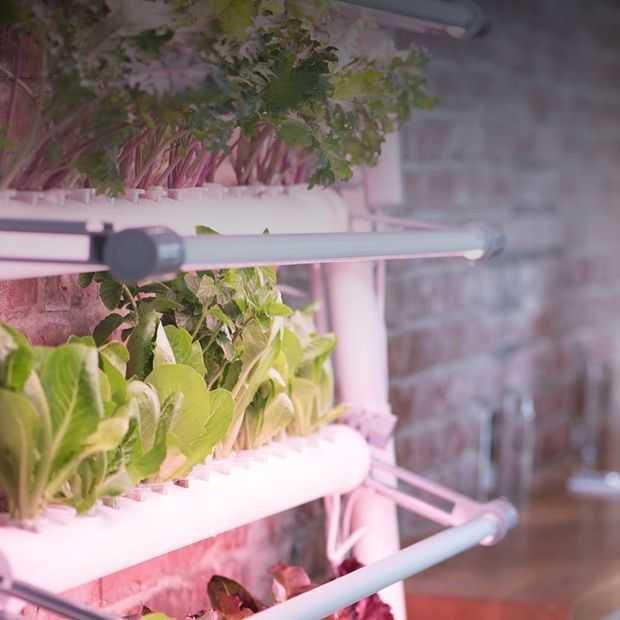 Geen tuin? Neem een eigen kas in je keuken met GardenBox
