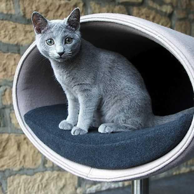 Kattenmandjes voor in stijlvolle en moderne huizen