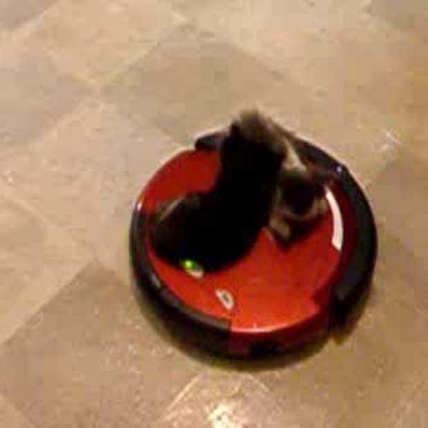 kittens riding vacuum
