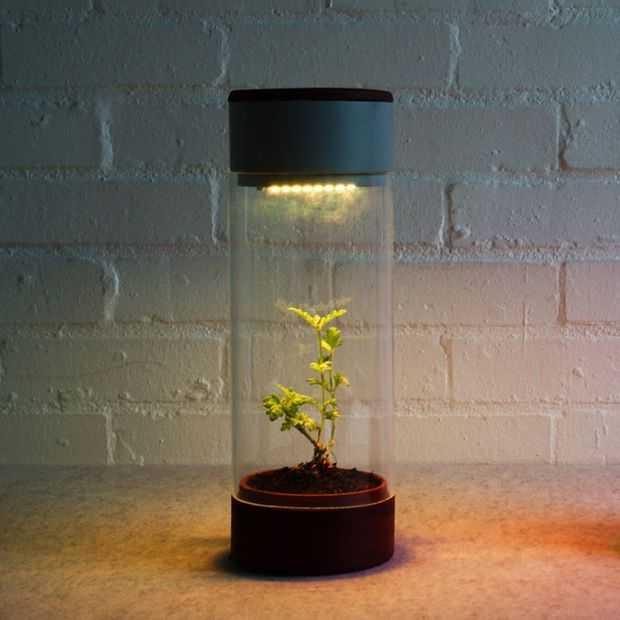 De Phabit laat je sporten om je planten in leven te houden