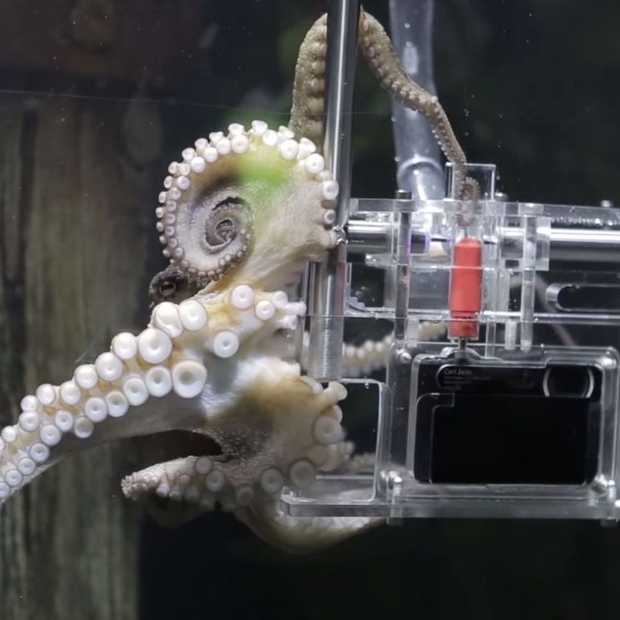 Sony's 'Octographer' verandert een octopus in een fotograaf
