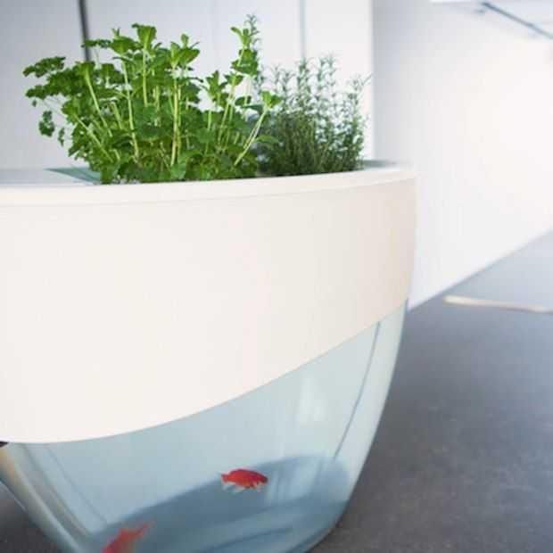 Vegua: Deze vissenkom laat op organische manier kruiden en plantjes groeien!