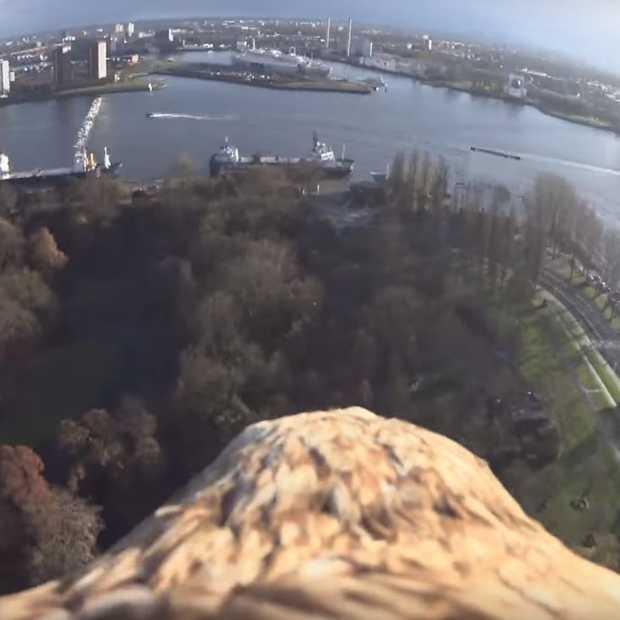 Deze zeearend vliegt met een camera op zijn rug over Rotterdam