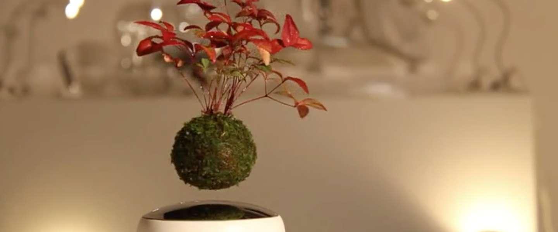 Deze zwevende boompjes maken je interieur helemaal af