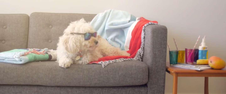 De Apple Watch voor je hond: Buddy