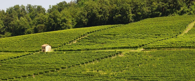 Droom van iedere wijnliefhebber: wijn uit je eigen wijnvat