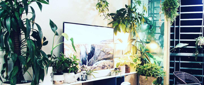 Zo maak je van je woonkamer een jungle