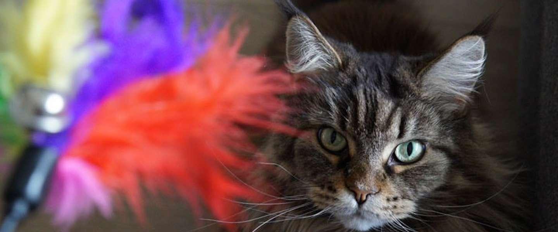 Kattenspeeltjes: met deze 5 toffe speeltjes scoor je zeker punten bij je kat!