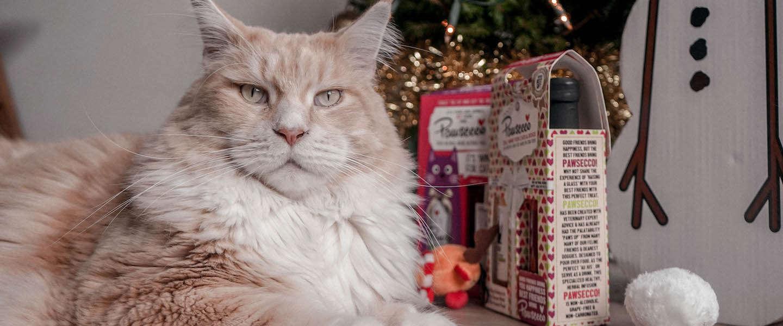 De 6 leukste kerstcadeaus voor je poes