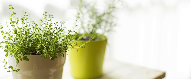 Dit is de meest stijlvolle plantenspuit!