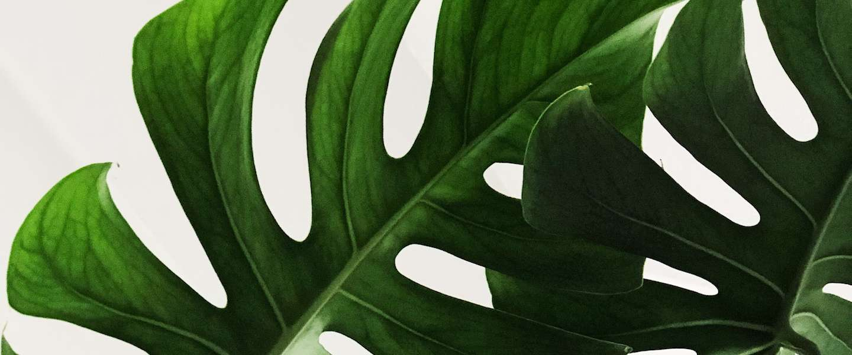 De voordelen van planten in huis