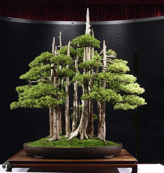 Duurste-bonsaibomen-ter-wereld-2