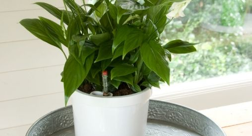 Een Cavmipot geeft je plant zelf water