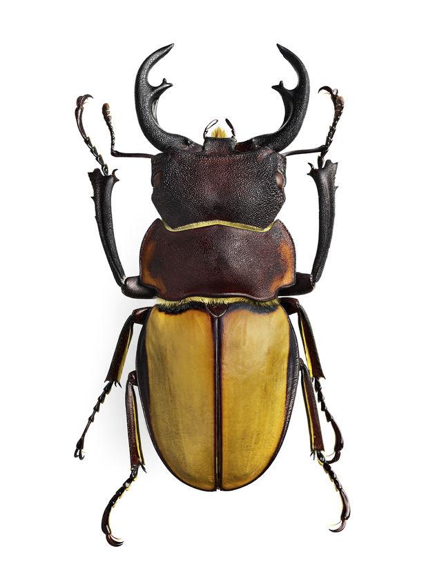 H6D-400c MS comparison_Beetle_Photo_By_Go_ran Liljeberg