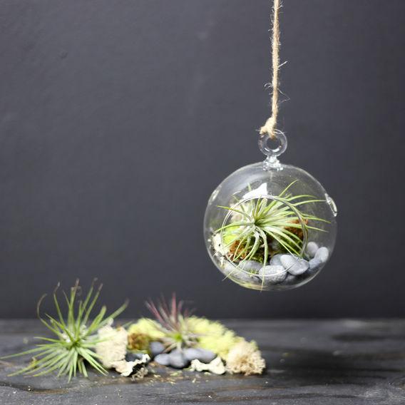 hanging-plant3