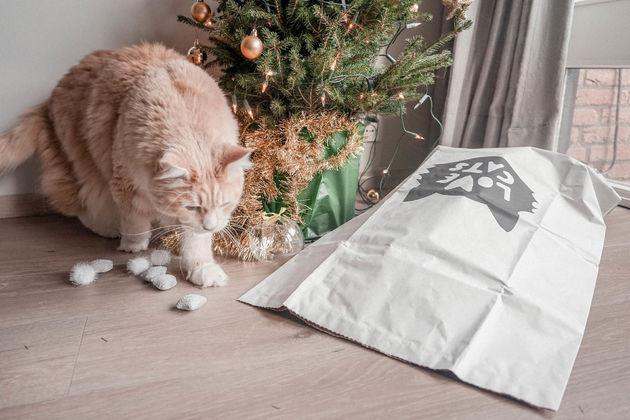 Kat-in-een-zak-kerstcadeau-poezenbazen