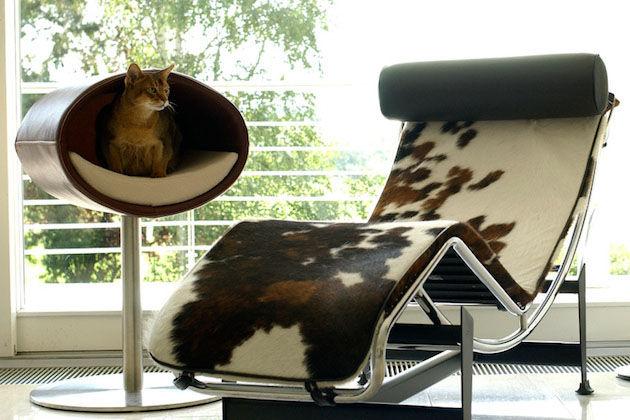 kattenmandjes-moderne-huizen-2