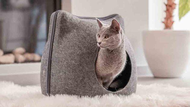 Kattenwebshop-poezenbazen-Poezenbaas-Blauwe-Rus-Mimi