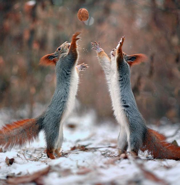 Liefste-foto's-eekhoorntjes-10