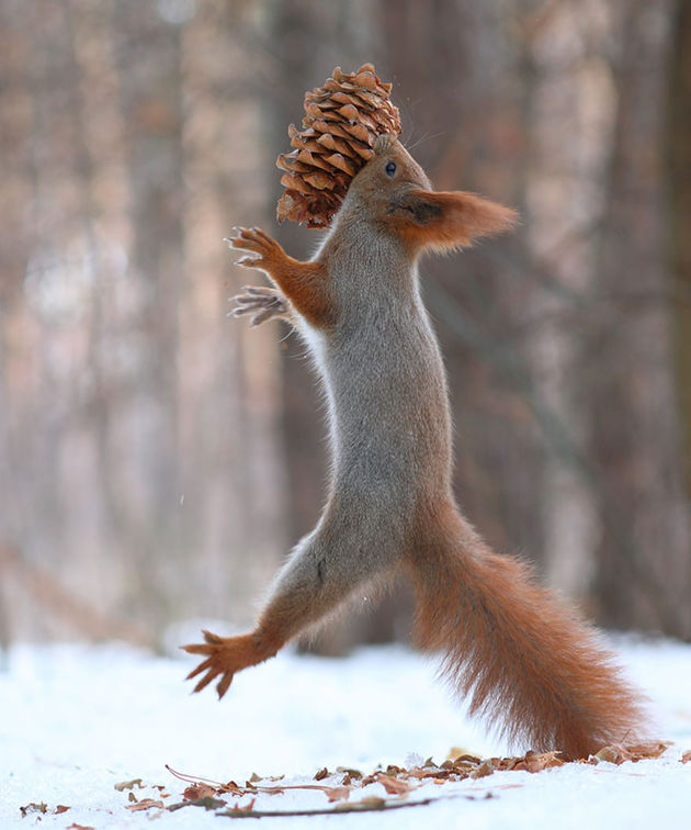 Liefste-foto's-eekhoorntjes-11