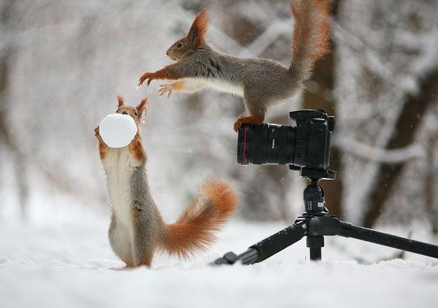 Liefste-foto's-eekhoorntjes-2