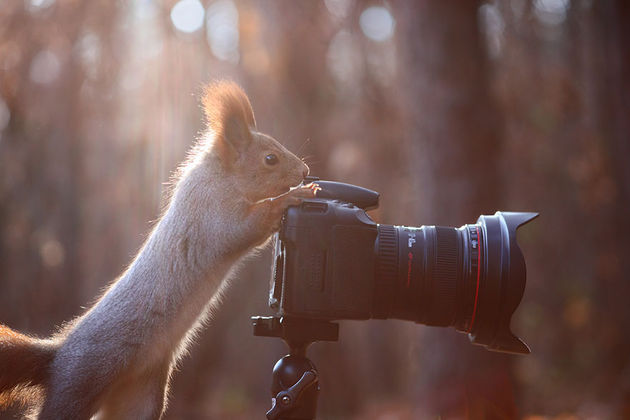 Liefste-foto's-eekhoorntjes-4