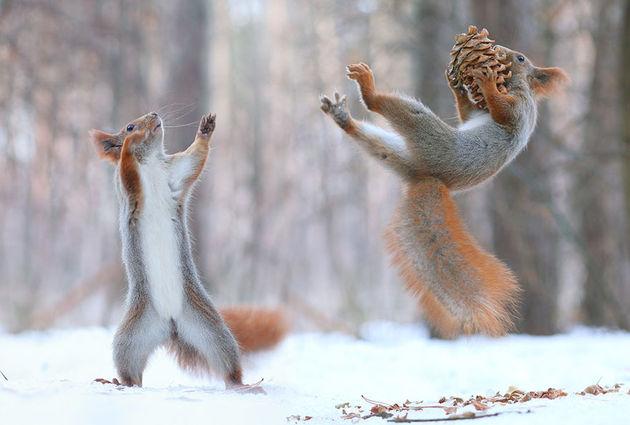 Liefste-foto's-eekhoorntjes-5