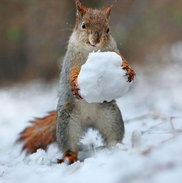 Liefste-foto's-eekhoorntjes-6