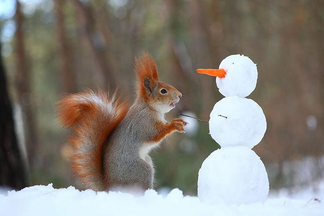 Liefste-foto's-eekhoorntjes-8