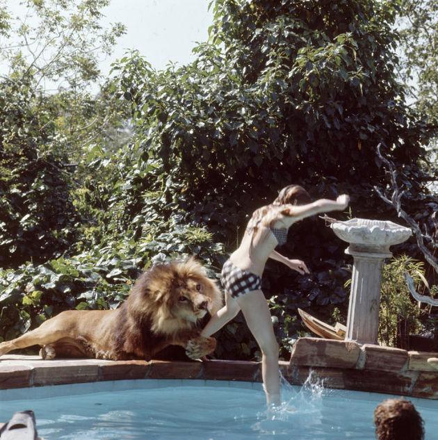 melanie-Griffith-leeuw9