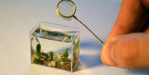 's Werelds kleinste vissenkom