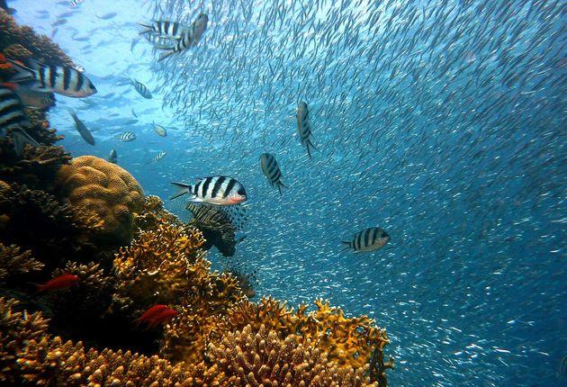 snorkelen-galapagos-eilanden