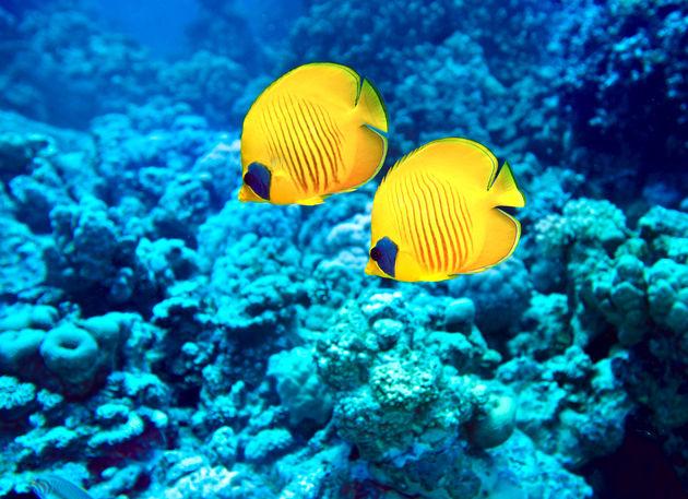 snorkelen-great-barrier-reef